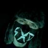 Аватар пользователя nesxd