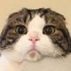 Аватар пользователя jty2
