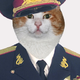 Аватар пользователя meowmeaws