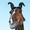 Аватар пользователя Lokobok1