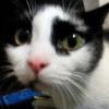 Аватар пользователя max4559
