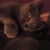 Аватар пользователя cattyx