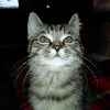 Аватар пользователя banapard