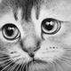 Аватар пользователя Valijh