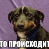 Аватар пользователя Pitunja