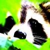 Аватар пользователя ENOTtut