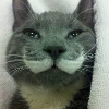 Аватар пользователя madbirdy
