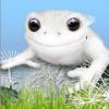 Аватар пользователя Psyrow