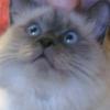 Аватар пользователя olvara