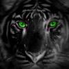 Аватар пользователя BlackTiger