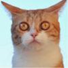 Аватар пользователя LaminatoR