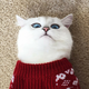 Аватар пользователя MadBro88