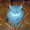 Аватар пользователя lostcat