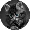 Аватар пользователя denis.rogulin