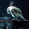 Аватар пользователя Snow.Queen