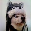 Аватар пользователя Huskyinhat