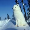 Аватар пользователя Arctic.fox
