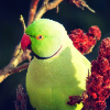 Аватар пользователя Balaxolka
