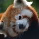Аватар пользователя ukary