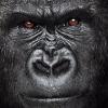 Аватар пользователя GorillaMsk