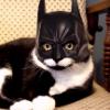 Аватар пользователя Batman.245