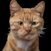 Аватар пользователя vaksick