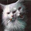 Аватар пользователя seri0uscat
