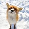 Аватар пользователя Picikak03