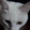 Аватар пользователя ivanushka00