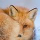 Аватар пользователя wolkan