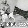 Аватар пользователя Vasilisasemen