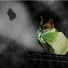 Аватар пользователя bruha