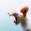 Аватар пользователя gypnopokazhu
