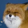 Аватар пользователя Kwout
