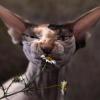 Аватар пользователя aznavour