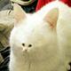 Аватар пользователя BabushkaKoshka