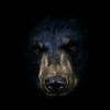 Аватар пользователя BearB