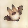 Аватар пользователя MouseKikimor