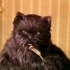 Аватар пользователя CatBehemoth