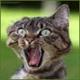 Аватар пользователя Kamzver