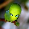 Аватар пользователя butterpillar