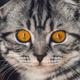 Аватар пользователя Elena09