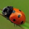 Аватар пользователя MrSomeone711