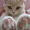 Аватар пользователя alyona.st