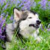 Аватар пользователя Sekfa