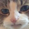Аватар пользователя presidentmeow