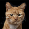 Аватар пользователя Natho