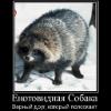 Аватар пользователя enotovidka