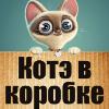 Аватар пользователя KOTEVKOROBKE