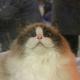Аватар пользователя ArrowInTheKnee